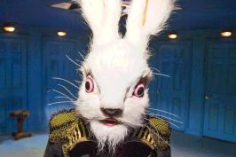 Rabbit adventures